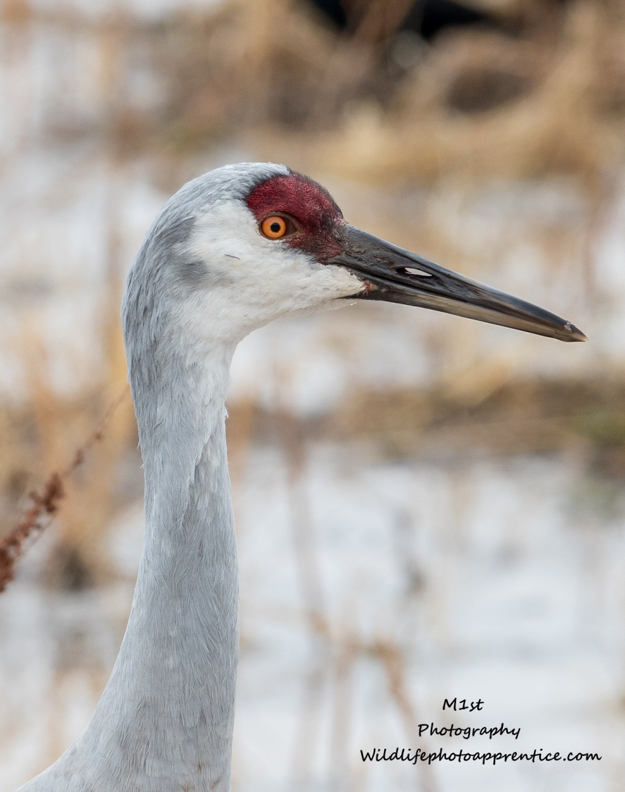 Bosque Del Apache and T or C : Great wildlife, good food, hot springs and a spa – The Wildlife Photography Apprentice