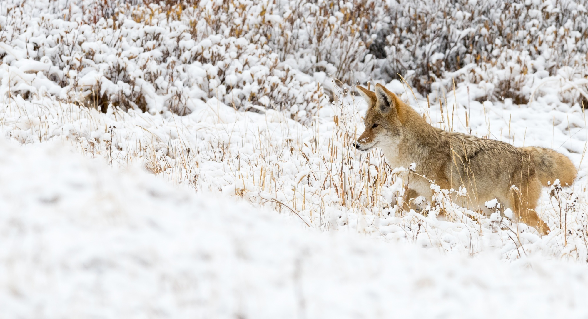 Yellowstone, a Wildlife Photographer's pilgrimage. – The Wildlife Photography Apprentice