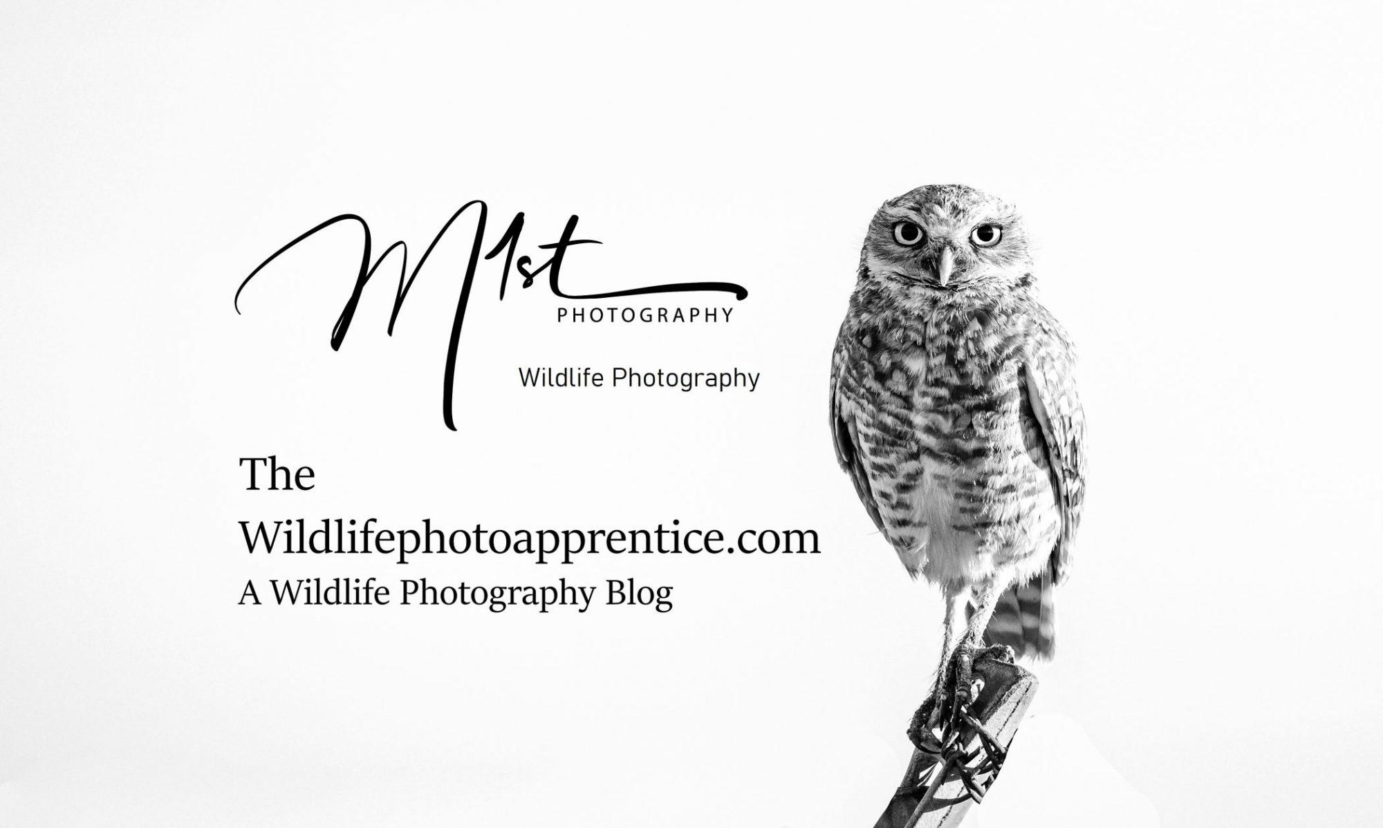 The Wildlife Photography Apprentice